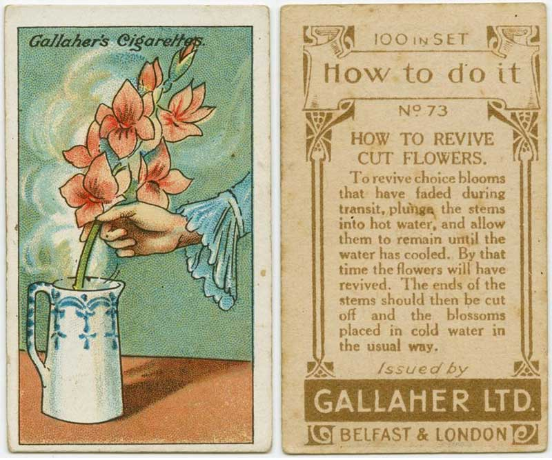 100_years_old_hacks_revive_flower